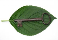 1068068_hortensia_leaf_with_old_key_1