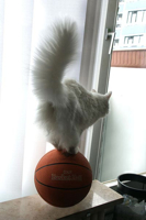 aa cat on ball